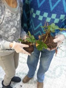quintinha da conceicao jardinagem-1